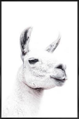 Llama II affiche encadrée