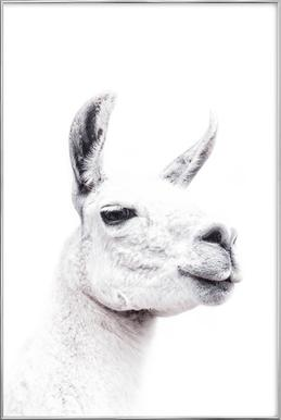 Llama II affiche sous cadre en aluminium