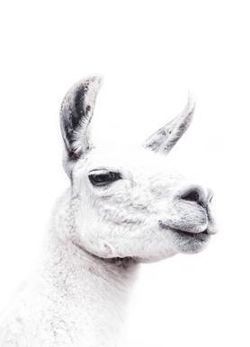 Llama II toile