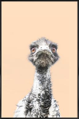 Orange Emu affiche encadrée