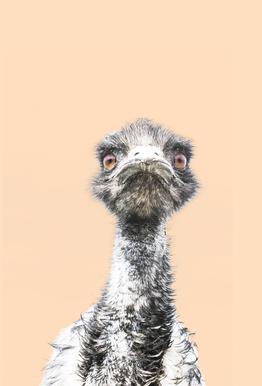Orange Emu tableau en verre