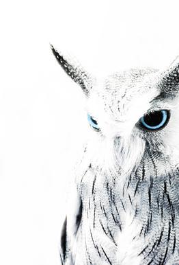 Owl II tableau en verre