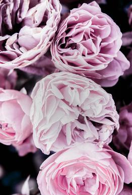 Pink flowers II tableau en verre