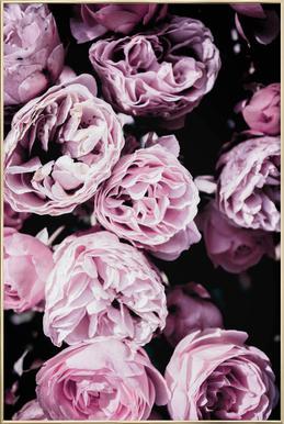 Pink Flowers III affiche sous cadre en aluminium