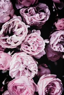 Pink Flowers III tableau en verre