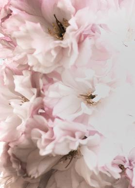 Pink Flowers toile