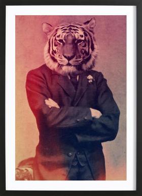 Old Timey Tiger ingelijste print