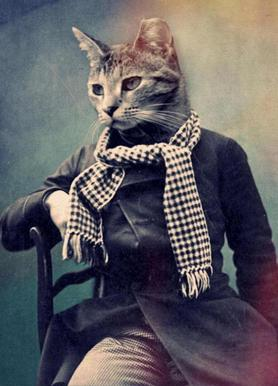 Cat in Scarf canvas doek