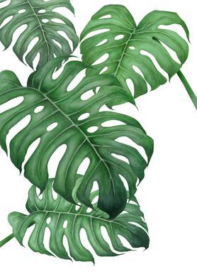 Tropical No.2 Canvas print