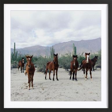 Bahía de los Ángeles Wild Horses Poster in houten lijst