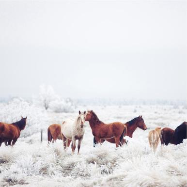 Winter Horseland acrylglas print