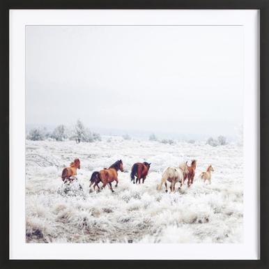 Winter Horses ingelijste print
