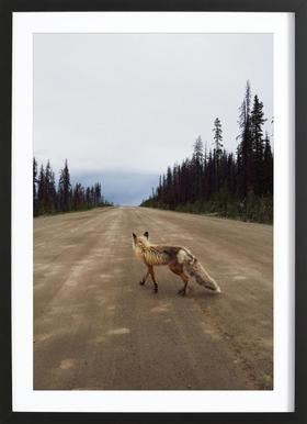 Road Fox Poster in Wooden Frame