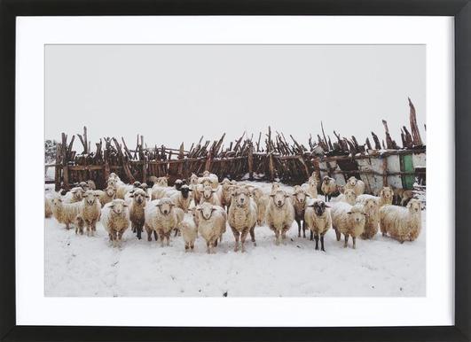 Buy Framed Sheep Prints and Art Online | JUNIQE UK