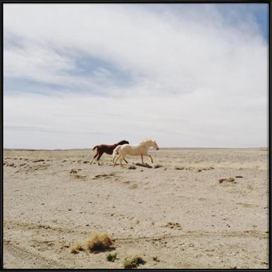 Bloomfield Horse Run Framed Poster