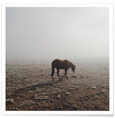 Fogged Horse poster