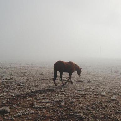 Fogged Horse canvas doek