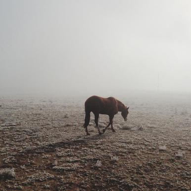 Fogged Horse acrylglas print