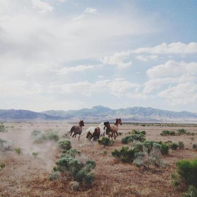 Running Horses canvas doek