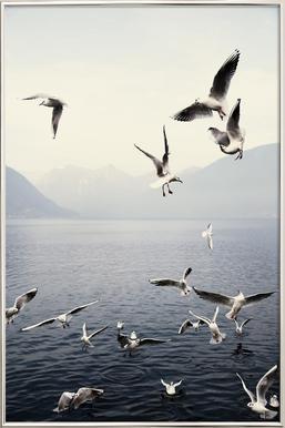Seagulls Affiche sous cadre en aluminium