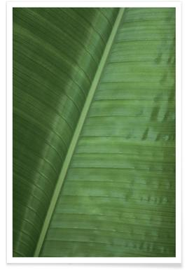 Green Banana Poster