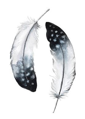 Feathers I Canvas Print