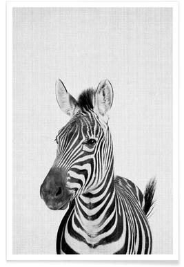 Zebra zwart-wit foto Poster