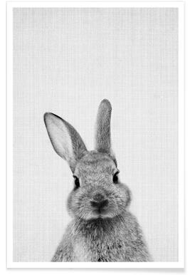 Lapin - Photo en noir et blanc affiche