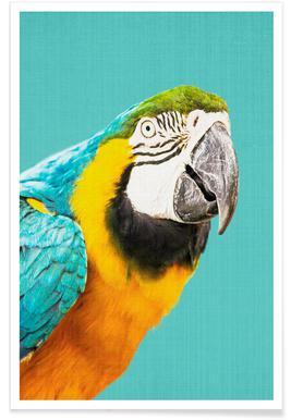 Papagei-fotografie -Poster