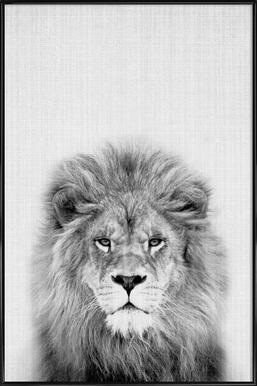 Lion Poster im Kunststoffrahmen