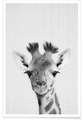 Photo monochrome de girafe Affiche