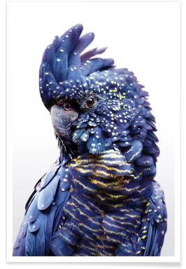 Perroquet bleu - Photo en noir et blanc Affiche