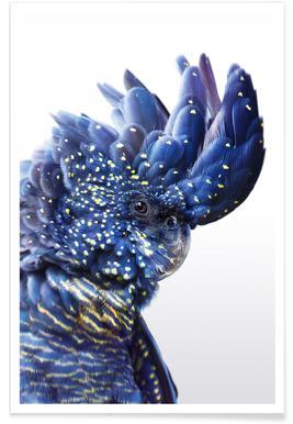 Perroquet - Photo couleur Affiche