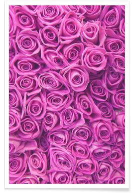 Purple Roses Photograph Poster