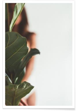 Ficus Lyrata 1 poster