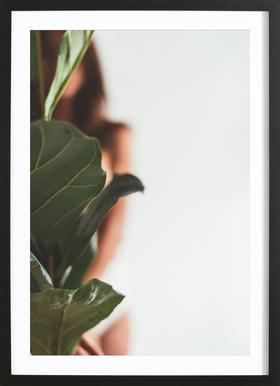 Ficus Lyrata 1 Poster im Holzrahmen