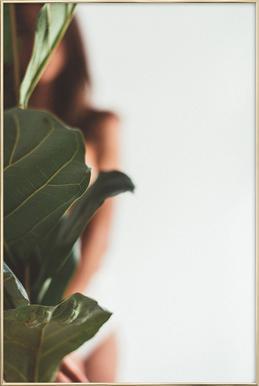 Ficus Lyrata 1 poster in aluminium lijst