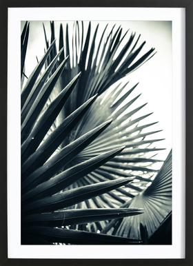 Palm Shade 2 ingelijste print