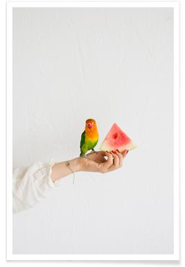 Watermelon And Parrot Poster