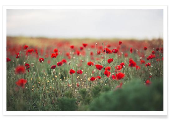Poppy Field Affiche