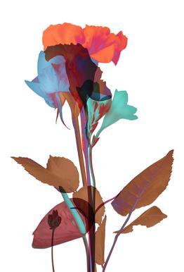 Ode aux Fleurs (Orange-Blue-Mint) acrylglas print