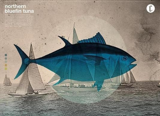 Northern Bluefin Leinwandbild