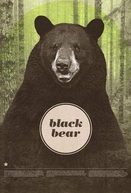 Black Bear Acrylglasbild