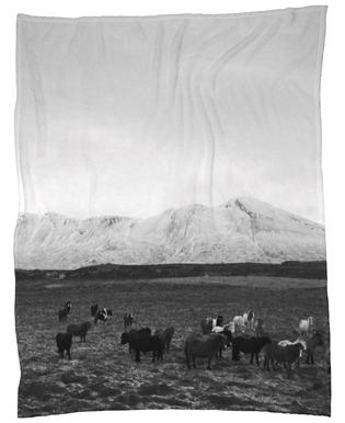 The herd Plaid