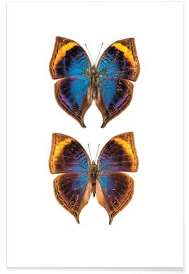 Buterfly Duo Poster