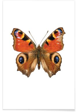 Butterfly affiche
