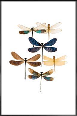 Insect 7 affiche encadrée