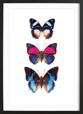 Butterfly 3 Affiche sous cadre en bois