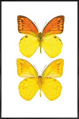 Butterfly 7 Framed Poster