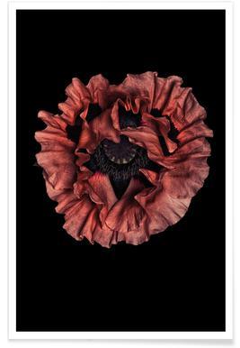 Poppy Flower Affiche
